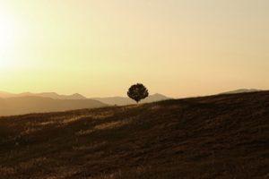 Pavienis medis laukuose saulelydyje